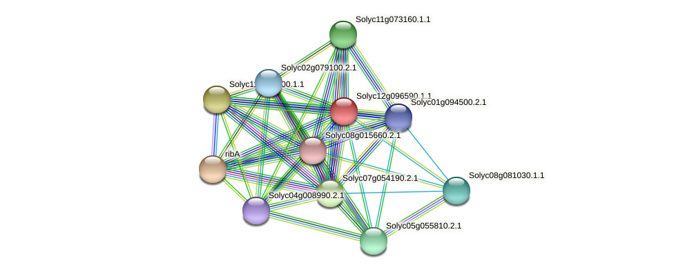 Solyc12g096590.1.1 protein (Solanum lycopersicum) - STRING interaction network