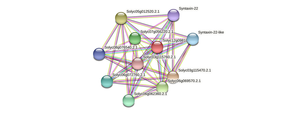 Solyc12g098180.1.1 protein (Solanum lycopersicum) - STRING interaction network