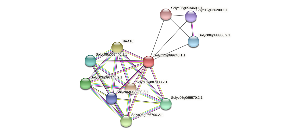 Solyc12g099240.1.1 protein (Solanum lycopersicum) - STRING interaction network