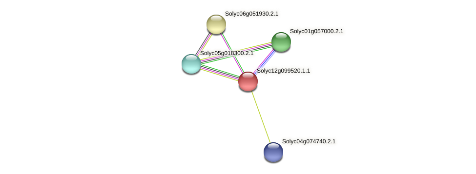 Solyc12g099520.1.1 protein (Solanum lycopersicum) - STRING interaction network