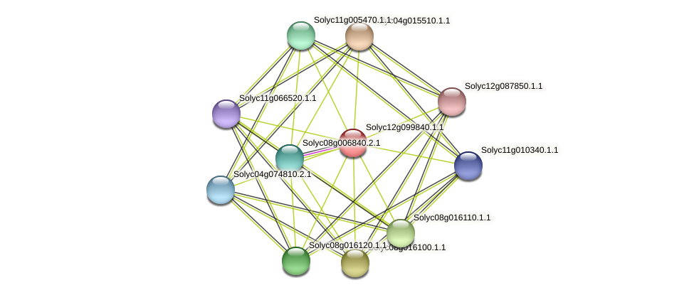 Solyc12g099840.1.1 protein (Solanum lycopersicum) - STRING interaction network