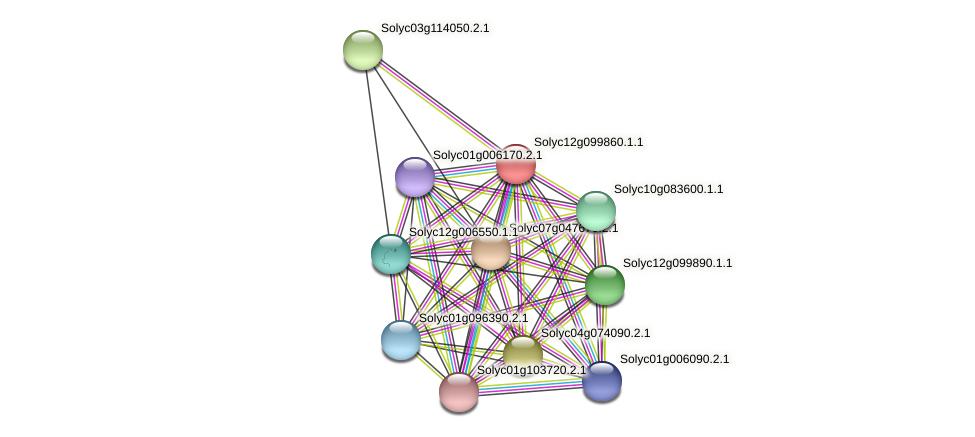 Solyc12g099860.1.1 protein (Solanum lycopersicum) - STRING interaction network