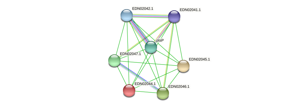 EDN02044.1 protein (Pseudoflavonifractor capillosus) - STRING interaction network