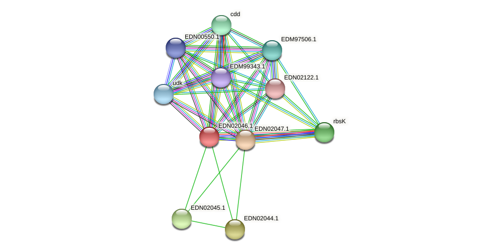 BACCAP_00079 protein (Pseudoflavonifractor capillosus) - STRING interaction network