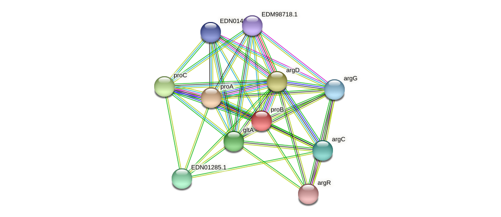 proB protein (Pseudoflavonifractor capillosus) - STRING interaction network
