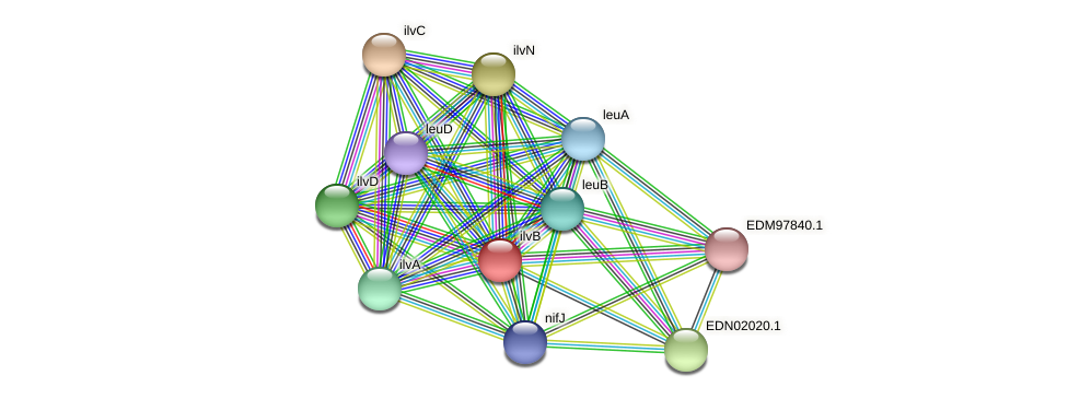 ilvB protein (Pseudoflavonifractor capillosus) - STRING interaction network