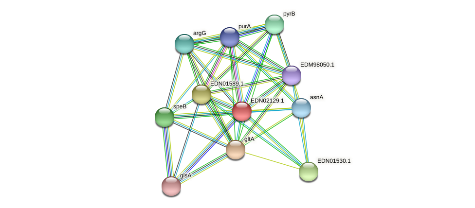 EDN02129.1 protein (Pseudoflavonifractor capillosus) - STRING interaction network