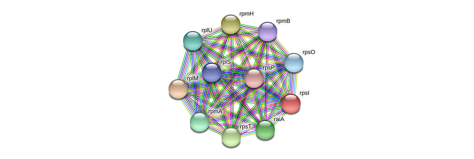 rpsI protein (Pseudoflavonifractor capillosus) - STRING interaction network