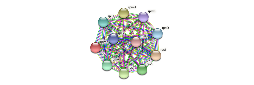rplM protein (Pseudoflavonifractor capillosus) - STRING interaction network
