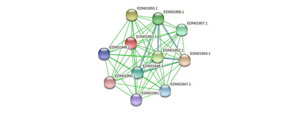 BACCAP_00297 protein (Pseudoflavonifractor capillosus) - STRING interaction network