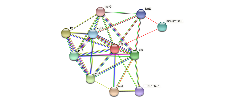 pth protein (Pseudoflavonifractor capillosus) - STRING interaction network
