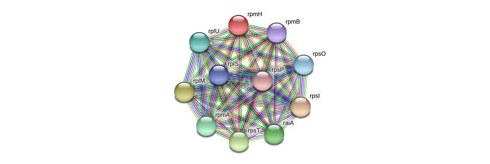 rpmH protein (Pseudoflavonifractor capillosus) - STRING interaction network