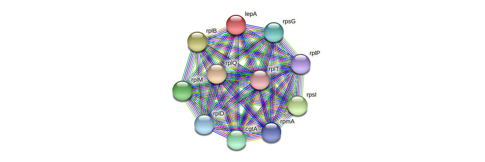 lepA protein (Pseudoflavonifractor capillosus) - STRING interaction network