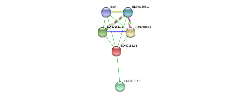 BACCAP_00477 protein (Pseudoflavonifractor capillosus) - STRING interaction network
