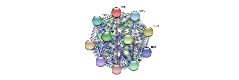 prfC protein (Pseudoflavonifractor capillosus) - STRING interaction network