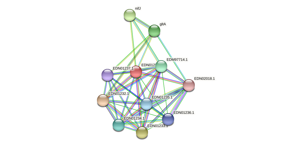 BACCAP_00799 protein (Pseudoflavonifractor capillosus) - STRING interaction network