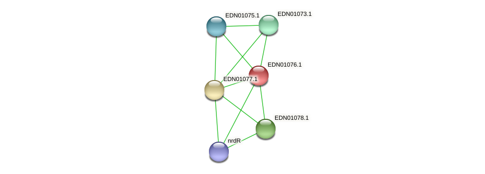 BACCAP_01017 protein (Pseudoflavonifractor capillosus) - STRING interaction network