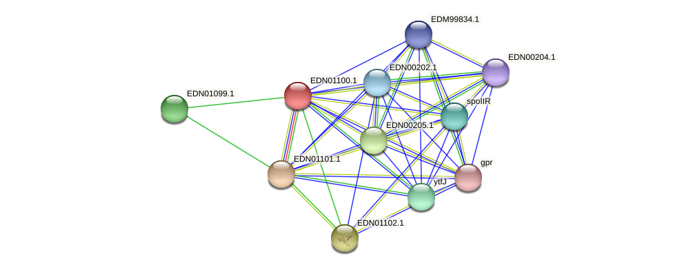 BACCAP_01041 protein (Pseudoflavonifractor capillosus) - STRING interaction network