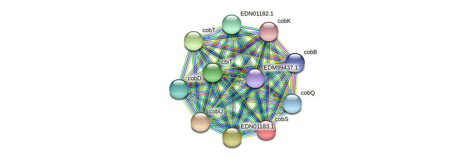 cobS protein (Pseudoflavonifractor capillosus) - STRING interaction network