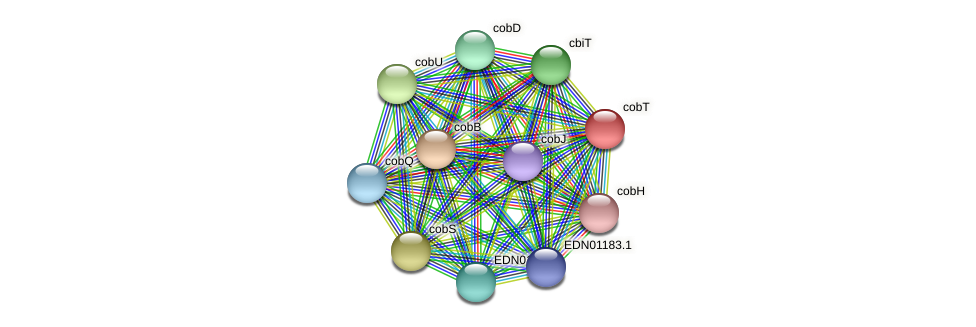 cobT protein (Pseudoflavonifractor capillosus) - STRING interaction network
