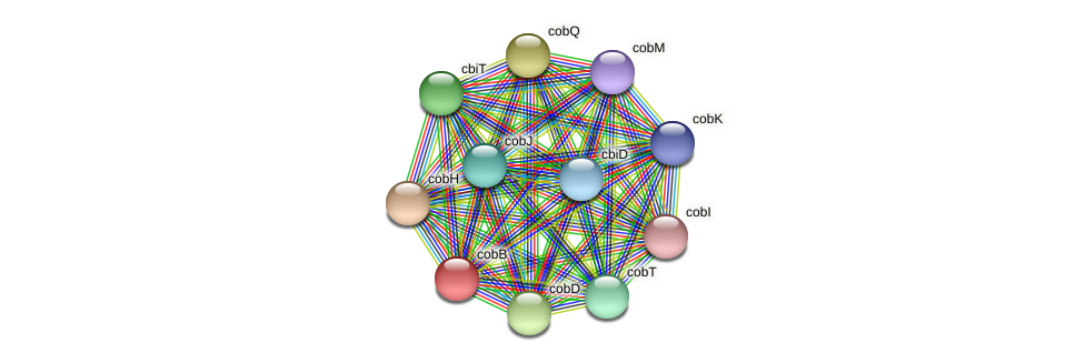 cbiA protein (Pseudoflavonifractor capillosus) - STRING interaction network