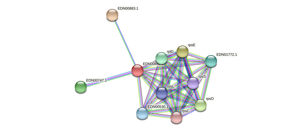 BACCAP_01234 protein (Pseudoflavonifractor capillosus) - STRING interaction network
