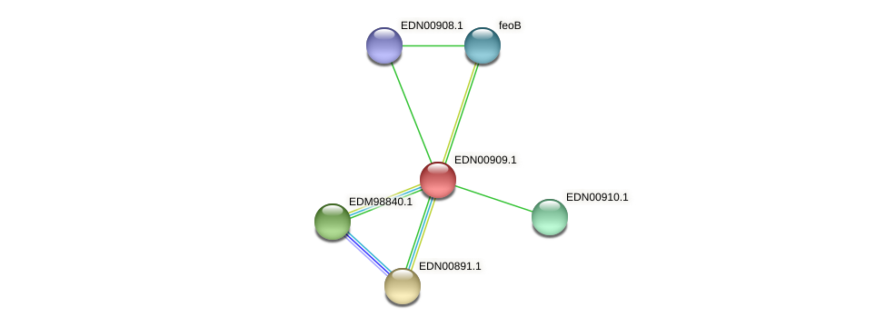 BACCAP_01261 protein (Pseudoflavonifractor capillosus) - STRING interaction network