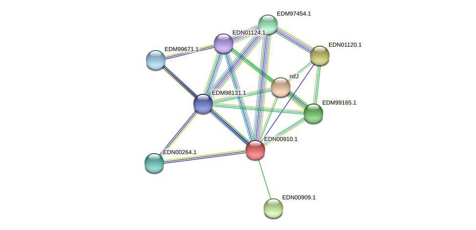 BACCAP_01262 protein (Pseudoflavonifractor capillosus) - STRING interaction network