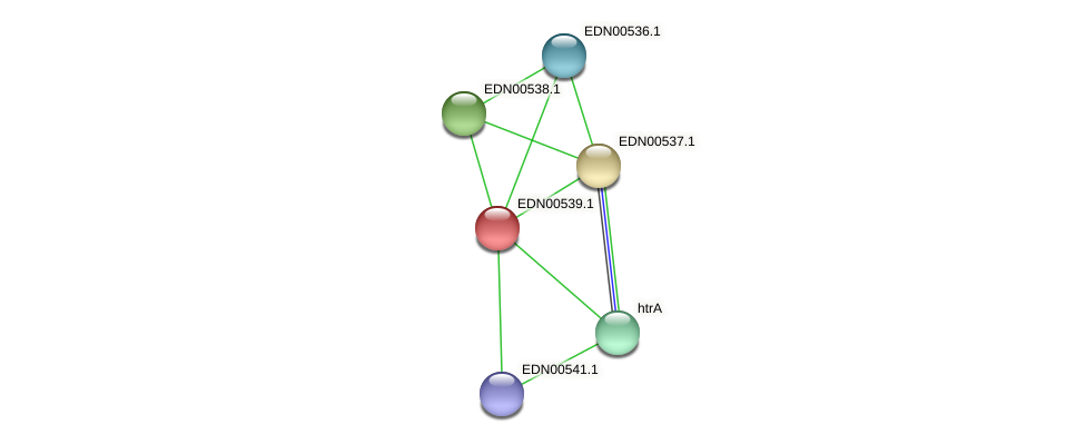 BACCAP_01305 protein (Pseudoflavonifractor capillosus) - STRING interaction network