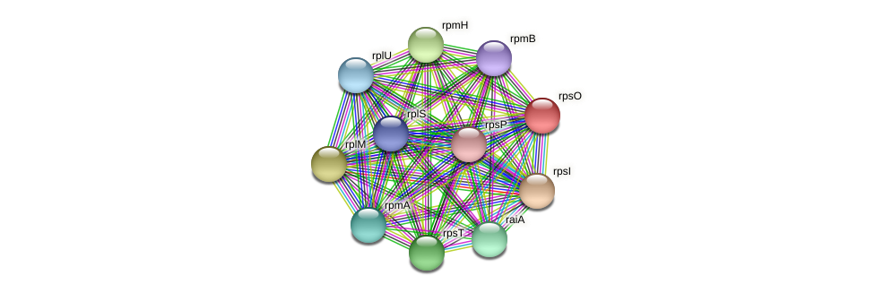 rpsO protein (Pseudoflavonifractor capillosus) - STRING interaction network