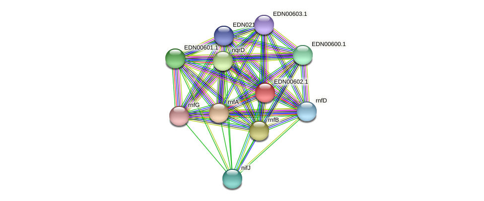 BACCAP_01368 protein (Pseudoflavonifractor capillosus) - STRING interaction network