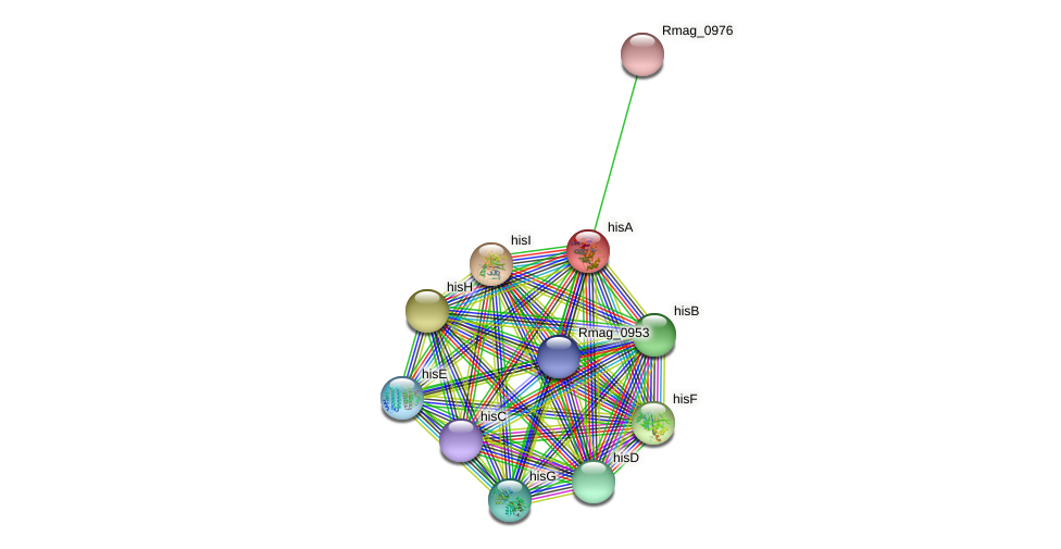 hisA protein (Ruthia magnifica) - STRING interaction network