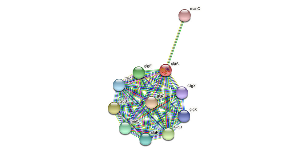 glgA protein (Rhodospirillum centenum) - STRING interaction network