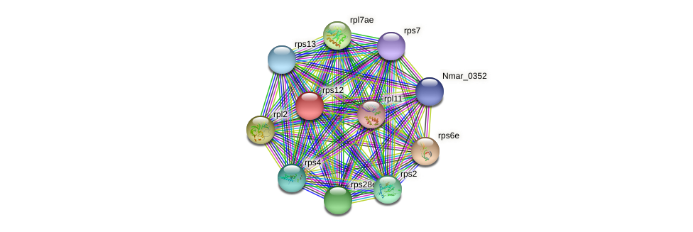 rps12 protein (Nitrosopumilus maritimus) - STRING interaction network
