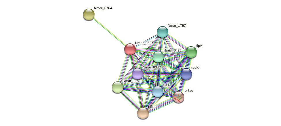 Nmar_0527 protein (Nitrosopumilus maritimus) - STRING interaction network