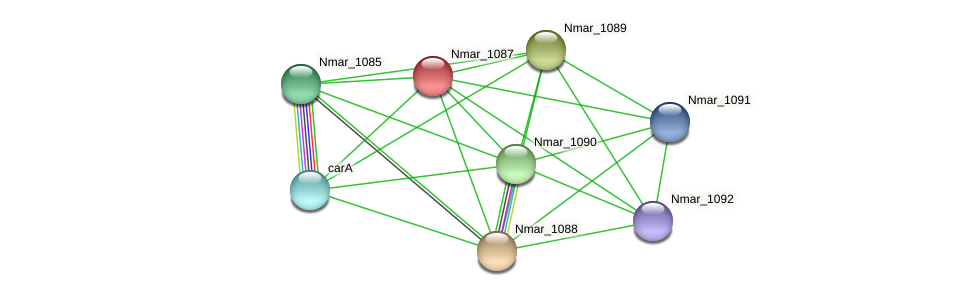 Nmar_1087 protein (Nitrosopumilus maritimus) - STRING interaction network