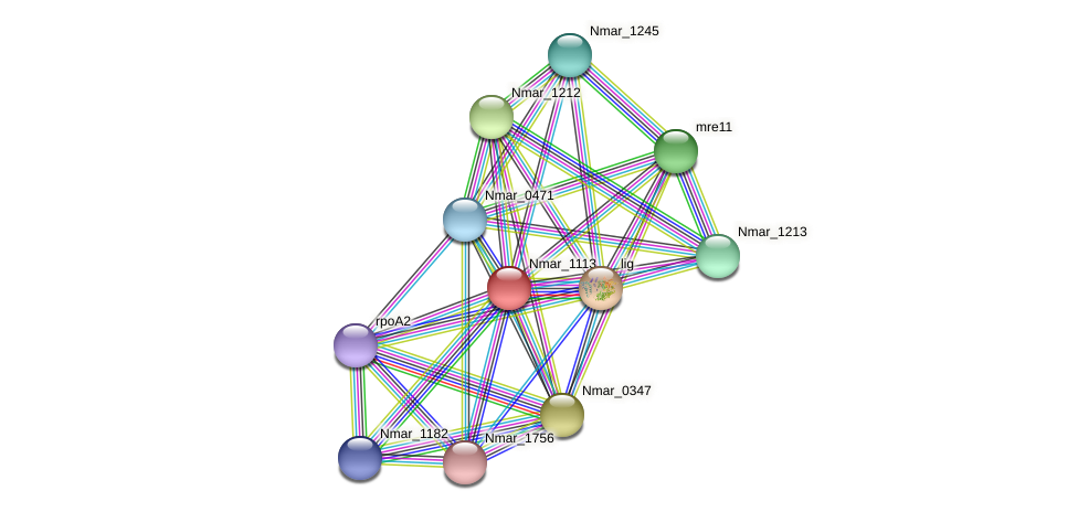 Nmar_1113 protein (Nitrosopumilus maritimus) - STRING interaction network
