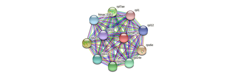 Nmar_1125 protein (Nitrosopumilus maritimus) - STRING interaction network
