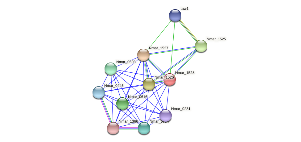 Nmar_1528 protein (Nitrosopumilus maritimus) - STRING interaction network