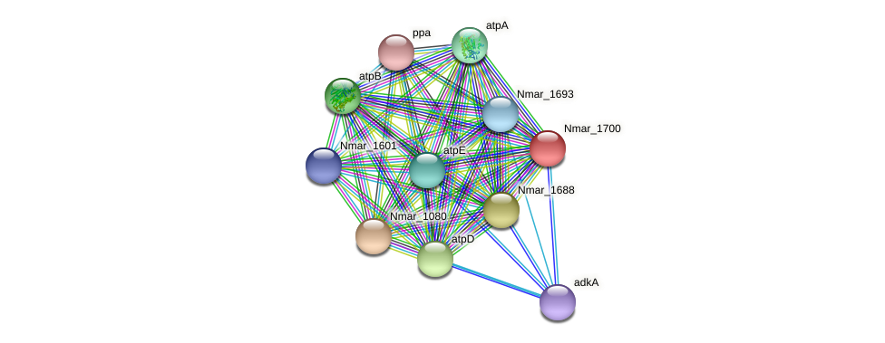 Nmar_1700 protein (Nitrosopumilus maritimus) - STRING interaction network