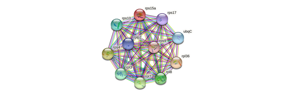 rps15a protein (Dictyostelium discoideum) - STRING interaction network