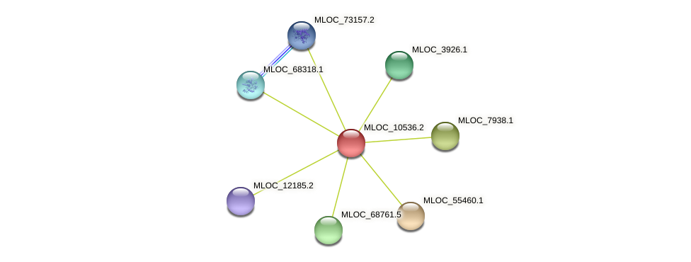 MLOC_10536.2 protein (Hordeum vulgare) - STRING interaction network