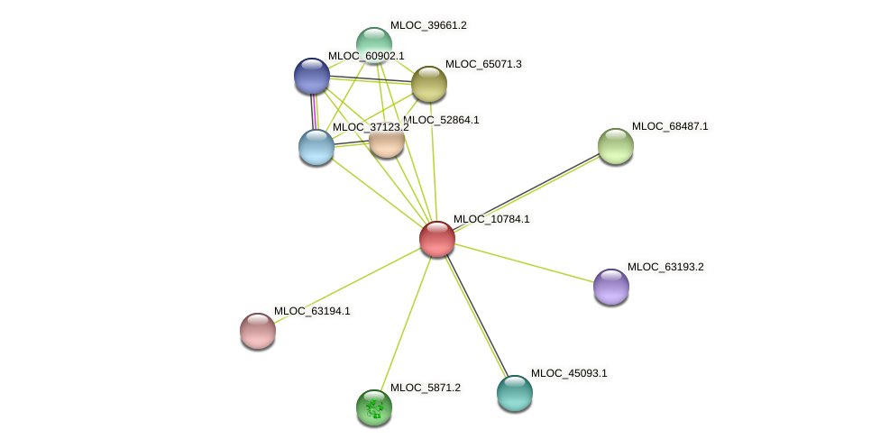 MLOC_10784.1 protein (Hordeum vulgare) - STRING interaction network