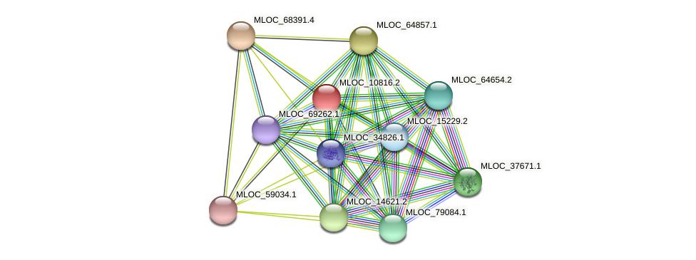MLOC_10816.2 protein (Hordeum vulgare) - STRING interaction network