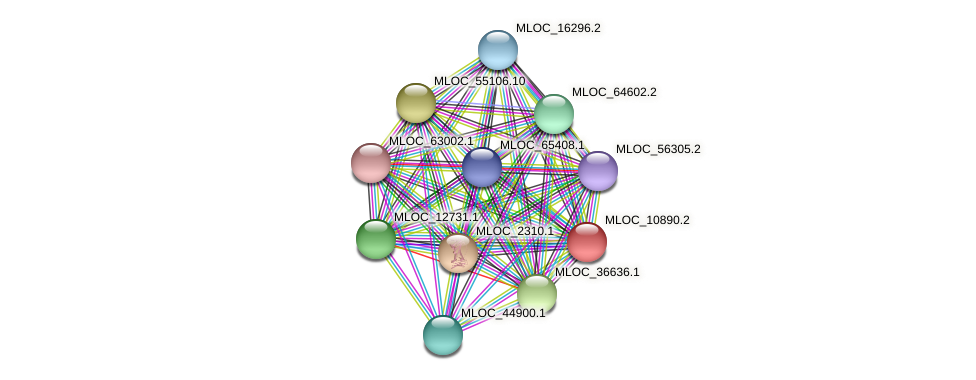MLOC_10890.2 protein (Hordeum vulgare) - STRING interaction network