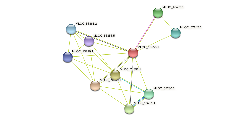 MLOC_10956.1 protein (Hordeum vulgare) - STRING interaction network