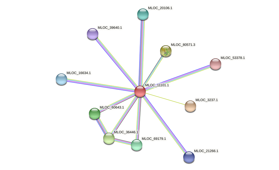 MLOC_11101.1 protein (Hordeum vulgare) - STRING interaction network