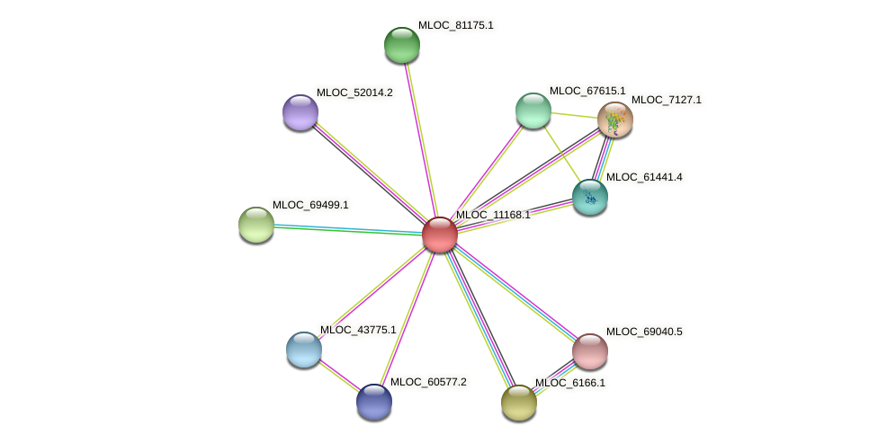 MLOC_11168.1 protein (Hordeum vulgare) - STRING interaction network