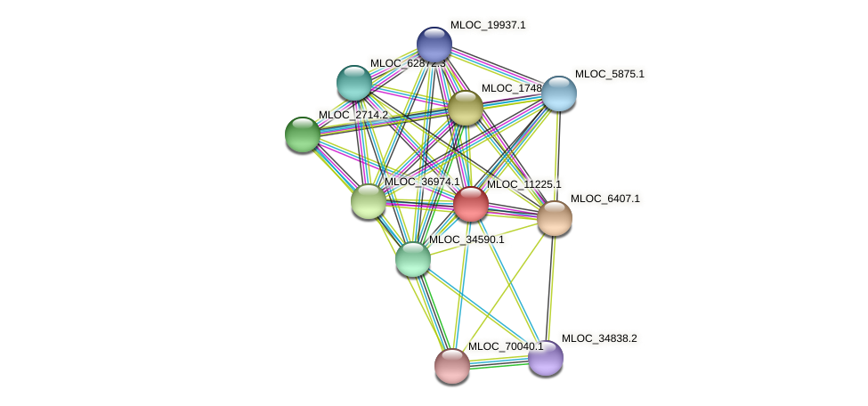 MLOC_11225.1 protein (Hordeum vulgare) - STRING interaction network