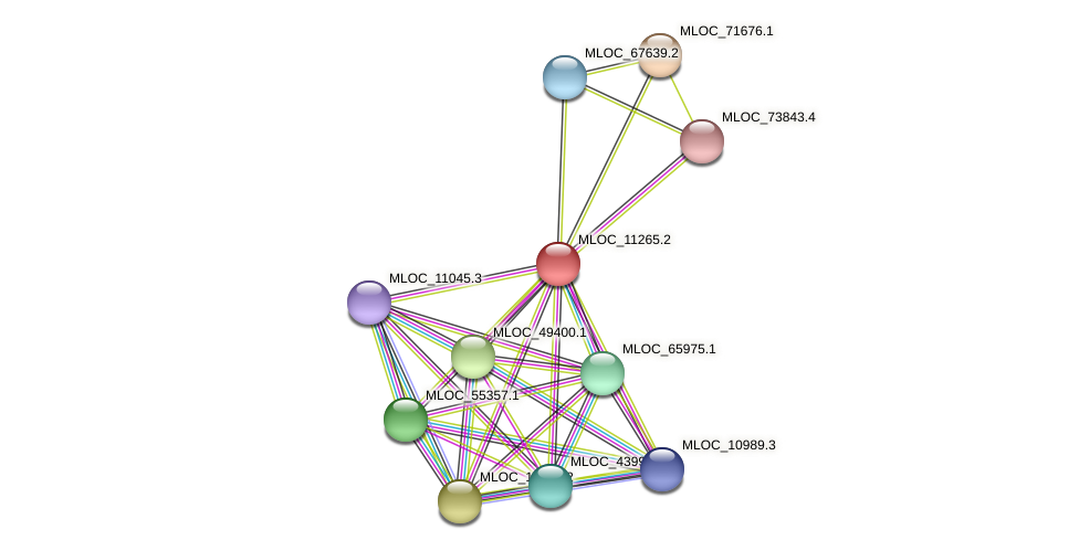 MLOC_11265.2 protein (Hordeum vulgare) - STRING interaction network